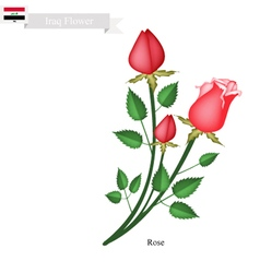 Rose Flowers The National Flower of Iraq vector image vector image