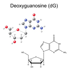 Structural chemical model of deoxyguanosine vector image vector image
