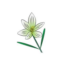 Cosmos flower vector image