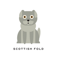 adorable scottish fold cat lop-eared kitten with vector image