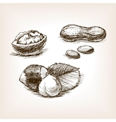 Nut sketch style vector image