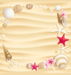seashell background vector image vector image