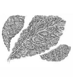 Croton leaf in paisley style vector