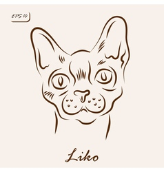 Liko cat vector