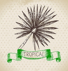 Hand drawn sketch tropical plants vintage vector