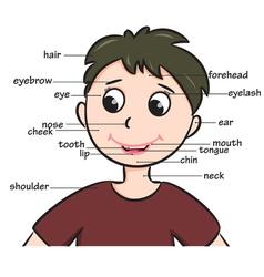 boyhead vector image