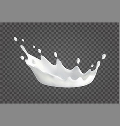 milk splash realistic vector image