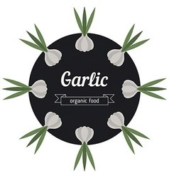 Garlic vegetables vector