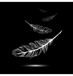 flying feathers with black background EPS 10 vector image vector image