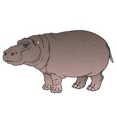 hippopotamus amphibius or river horse vector image