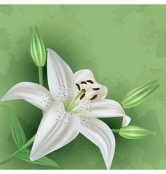 Vintage floral green background with flower lily vector