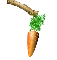 Carrot on a rope vector