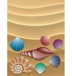 Shells on the sand vector