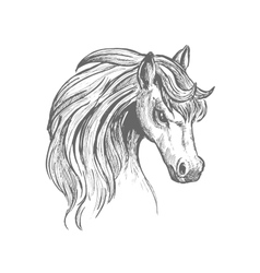 Head of a horse with wavy mane sketch symbol vector