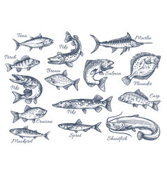 Sketch icons of fish of river or sea vector