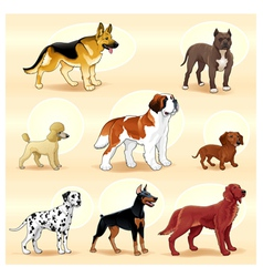 Groups of dog vector