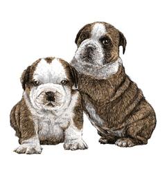 Puppy bulldogs 01 vector image vector image