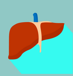 Liver with shadow vector
