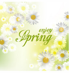 Spring beautiful background with flowers daisies vector