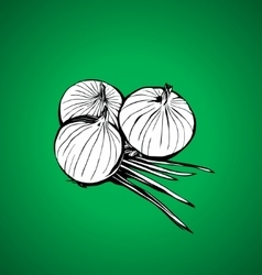 onions vector image