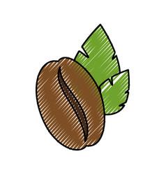 coffee bean natural vector image vector image