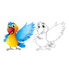 doodle animal for macaw parrot vector image