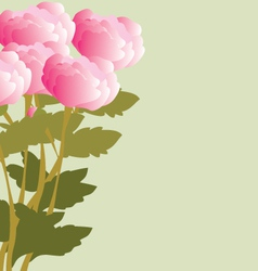 Peonies bouquet vector