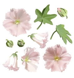 Set of pink mallow flowers on white background vector