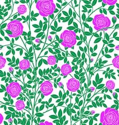 Violet roses vector