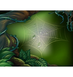A spider web in a rainforest vector image