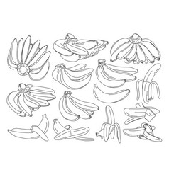 banana isolated on white background vector image vector image
