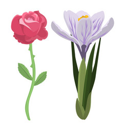 beautiful spring flower botanical bloom watercolor vector image