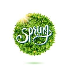 Fresh green leaves and sunshine for Spring vector image