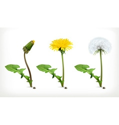 Dandelion flowers icon set vector