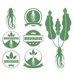 Horseradish vector