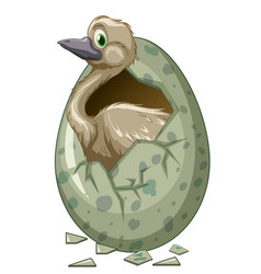 Wild bird hatching egg vector