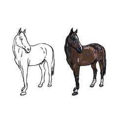Elegance horse on white background vector