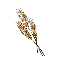 Doodle wheat spikelets vector