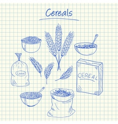 cereals doodles squared paper vector image