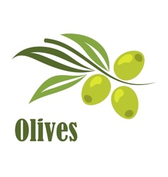 Green olives branch vector image vector image