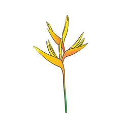 Heliconia flower vector