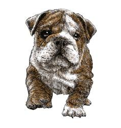 Puppy bulldogs 03 vector image vector image