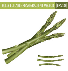 Asparagus on white background vector