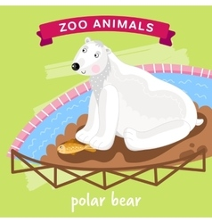 Zoo animal polar bear vector