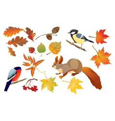 Set of isolated autumn forest leafs vector