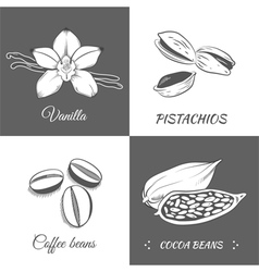 Set with vanilla pistachios cocoa and coffee beans vector image