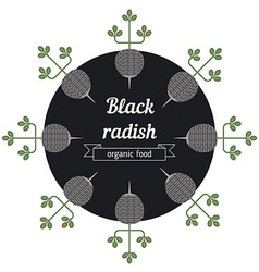 Black radish vegetables vector