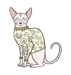 Sphinx cat in sweater vector