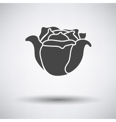 Cabbage icon on gray background vector