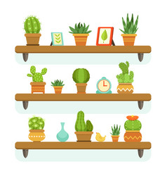 Cactuses in pots stand on the shelves decorative vector